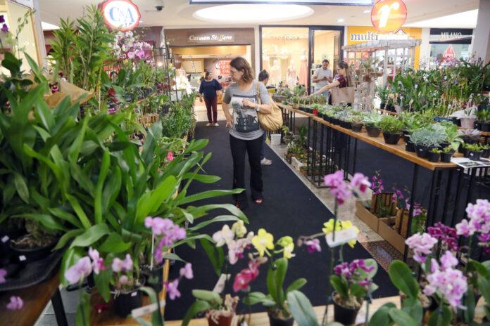 Festival de Orquídeas no Riopreto Shopping traz espécies raras