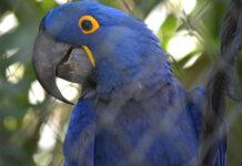 Rio Preto - Zoológico abre no feriado com enriquecimento ambiental