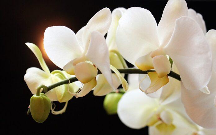 Rio Preto sedia a 4º Exposição Nacional de Orquídeas